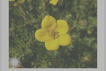 The best app for recognize the plants