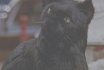 Sabrina Vita da Strega: that's the new cat Salem!