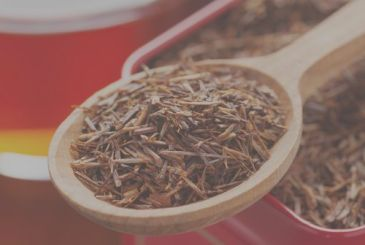 Rooibos: red Tea of south Africa slimming